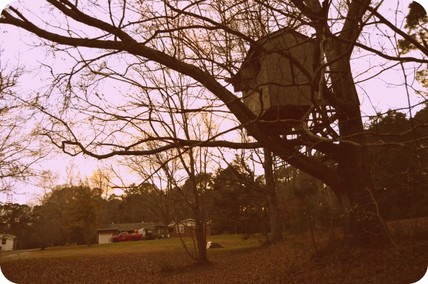 This treehouse sits in the tree beside the barn (picture above this one) and the house I was referring to in background. My Nanny and Papas (my Dads parents) house outside of Southport, NC.My Dad and his brothers built this house as older kids and we were still able to play (carefully in it as kids as well)